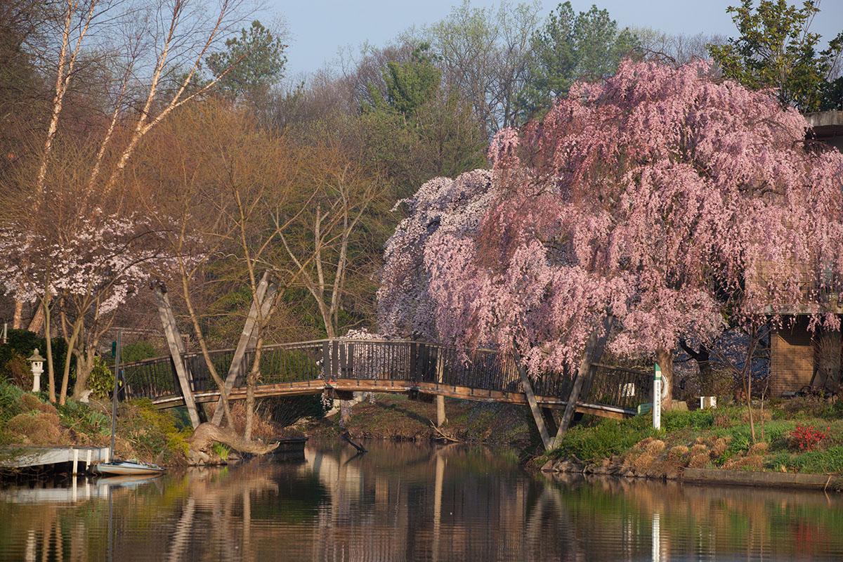 Van Gogh Bridge_photo credit Charlotte Geary
