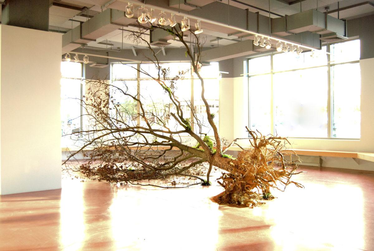 Sleeping Tree - Shinji Turner Yamamoto
